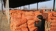 Onions in a Warehouse - stock footage