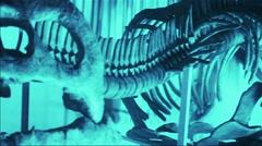 Jurassic Skeleton Stock Footage