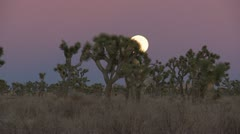Time Lapse of Full Moon Rising Behind Joshua Tree Stock Footage