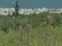 Greece kos Nature Heath 001 Stock Footage