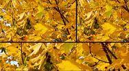 Autumn collage Stock Footage