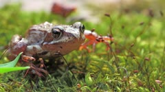 frog - stock footage