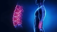 Focused on spine LUMBAR region in loop - stock footage