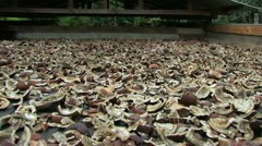 Sun-Drying Coconut Meat (Copra) Stock Footage
