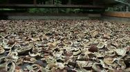 Stock Video Footage of Sun-Drying Coconut Meat (Copra)