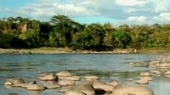 Jungle River Loop Stock Footage