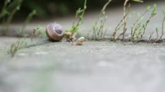 Baby snail Stock Footage