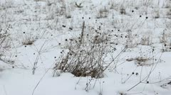Dry grass in the wind against the backdrop of the snow Stock Footage