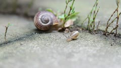 Baby snail - stock footage