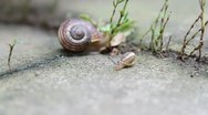 Stock Video Footage of Baby snail