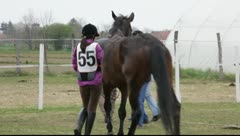 Veterinary examination on controlled long-distance race - Endurance riding Stock Footage