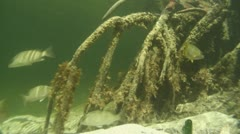 Busy mangrove roots 02 Stock Footage
