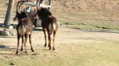 San Diego Safari Park Photo Caravan Stock Footage