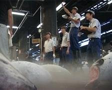 Tuna Auction at Tsukiji Fish Market, Tokyo Japan GFSD - stock footage