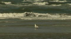 Seagull at North Sea Shore - The Netherlands Stock Footage
