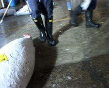 Dragging Frozen Tuna Fish with Hooks at the Fish Market, Tokyo Japan GFSD Stock Footage