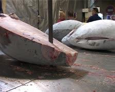 Sawing Tuna Fish in Half at Tsukiji Fish Market, Tokyo Japan GFSD Stock Footage
