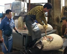 Tuna at Tsukiji Fish Market, Tokyo Japan GFSD Stock Footage