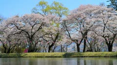 Reflection of cherry blossoms in the river. Stock Footage
