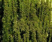 Bushy plant - stock footage