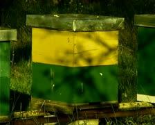 Beehive Stock Footage