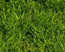 Meadow Stock Footage