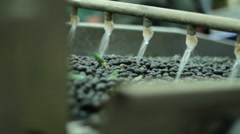 Oil mill - olive oil production - Series - stock footage