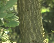 Tree  with leaves Stock Footage