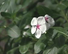 White flowers Stock Footage