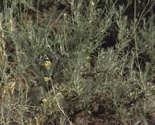 Seedling plant with yellow bud Stock Footage