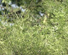 Green plants in Botanical garden Stock Footage
