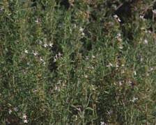 Flowers on bushy plant Stock Footage