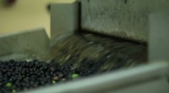 Stock Video Footage of Oil mill - olive oil production - Series
