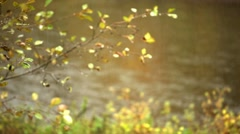 Rain forest on the river in autumn Stock Footage