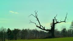 Dead creepy tree Stock Footage