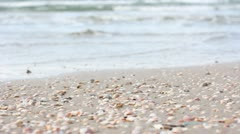 Shells waves seaside relax seascape sea-shell tourist vacations vacation clam - stock footage