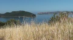 Dried grass panorama Stock Footage