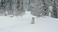Dog running through snow slow motion 7112 Stock Footage