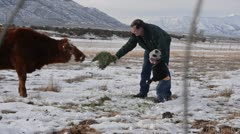Man and Boy feeding calf 7199 Stock Footage