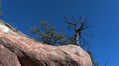 Colorado tree and red rock sx Stock Footage