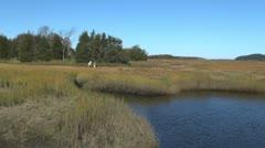 Massachusetts Essex marsh tidal stream with artist sx Stock Footage