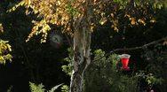 Sunny Backyard Trees Stock Footage
