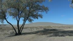 Idaho Bruneau Sand Dunes and tree sx Stock Footage