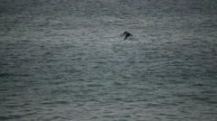 Bird, Pelican Over Ocean Stock Footage