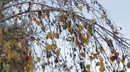 Swaying Branches Stock Footage
