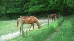 Horses 02 - stock footage
