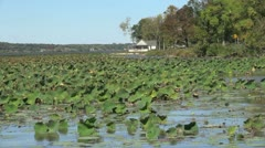 Illinois Mississippi River with water lilies Stock Footage