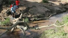 Stock Video Footage of Schoolboys Crossing Creek on Fallen Tree