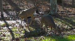 Backlit Deer Shot Dolly Mammoth Cave National Park Part 1 Stock Footage