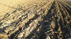 Ground dry field Stock Footage